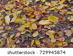 multicolored leaves on the... | Shutterstock . vector #729945874