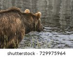 bear fishing by the water with...   Shutterstock . vector #729975964