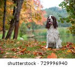 English Springer Spaniel Dog...