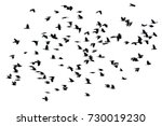 a flock of black crows flying... | Shutterstock . vector #730019230