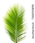 one green coconut leave... | Shutterstock . vector #730055890