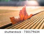 Autumn  Fall  Red Sycamore Lea...