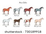Stock vector set of horse color chart equine coat colors with text equestrian scheme bay sorrel chestnut 730189918