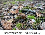 a beautiful mushroom in the... | Shutterstock . vector #730195339