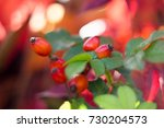 rose hip tea  photo for red... | Shutterstock . vector #730204573