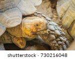 giant african spurred tortoise  ... | Shutterstock . vector #730216048