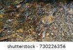 minnehaha creek  | Shutterstock . vector #730226356