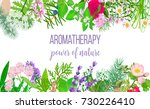 card with essential oil plants. ... | Shutterstock .eps vector #730226410