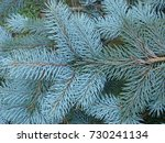 natural old christmas tree wood ... | Shutterstock . vector #730241134