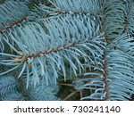 natural old christmas tree wood ... | Shutterstock . vector #730241140