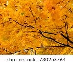 golden autumn background of... | Shutterstock . vector #730253764
