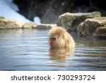 soothing spring monkey  | Shutterstock . vector #730293724