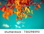 autumn leaves with the blue sky ... | Shutterstock . vector #730298593