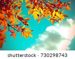autumn leaves with the blue sky ... | Shutterstock . vector #730298743