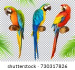 ara parrot. macaw. photo... | Shutterstock .eps vector #730317826