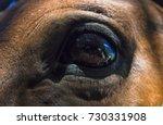 bright eyes    Shutterstock . vector #730331908