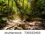 Autumn Forest Trail. North...