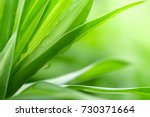 closeup nature view of green... | Shutterstock . vector #730371664