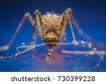 mosquito on the water. aedes... | Shutterstock . vector #730399228