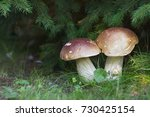 Two Large Boletus In The Fores...