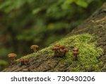 Poisonous Mushroom On Old Trunk ...