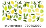 lemons on the branches  lemon... | Shutterstock . vector #730462030