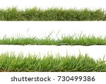 grass isolated on white... | Shutterstock . vector #730499386
