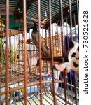 dove bird in a cage. | Shutterstock . vector #730521628