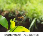 Small photo of Touch nature Touch mind