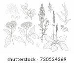 vector flowers and herbs on a... | Shutterstock .eps vector #730534369