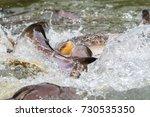 the iridescent shark feeding in ... | Shutterstock . vector #730535350