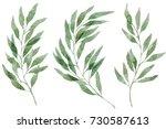 a set of watercolor eucalyptus... | Shutterstock . vector #730587613