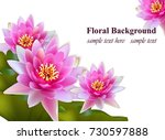 pink water lily flowers... | Shutterstock .eps vector #730597888