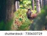 Red deer stag between ferns in autumn forest. - stock photo