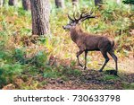 red deer stag with ferns in... | Shutterstock . vector #730633798