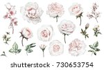 set watercolor elements of... | Shutterstock . vector #730653754