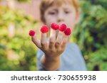 child picking raspberry. kids... | Shutterstock . vector #730655938