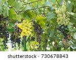 grape | Shutterstock . vector #730678843