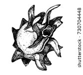 vector hand drawn pitaya on... | Shutterstock .eps vector #730704448