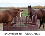 two brown horses inside a pen... | Shutterstock . vector #730707838
