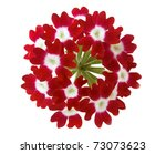 Red Verbena Flower Isolated On...