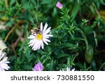 insects arthropods. a bee on a ... | Shutterstock . vector #730881550