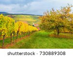 landscape with autumn vineyards ... | Shutterstock . vector #730889308
