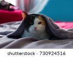 Funny Sleepy Tortoiseshell Cat...