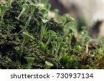 close up of cyan lichen and... | Shutterstock . vector #730937134