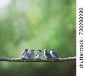 five little baby blue birds...   Shutterstock . vector #730988980