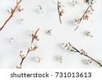 cotton branches set on white... | Shutterstock . vector #731013613