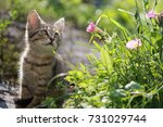 Stock photo an incredibly beautiful portrait of a kitten in the rays of the morning sun funny kitten looks at 731029744
