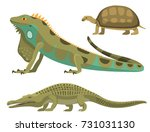 reptile and amphibian colorful... | Shutterstock .eps vector #731031130