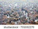 frozen marsh in winter | Shutterstock . vector #731032270